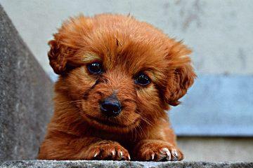 Ongewenst gedrag puppy
