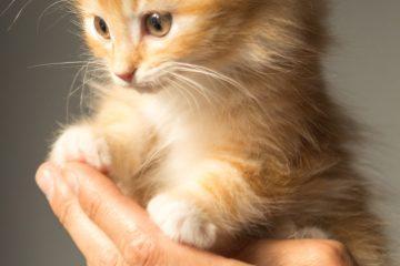 Een kitten aanschaffen, wat komt er allemaal bij kijken